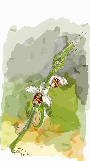 פרח הדבורנית בנחל אורן