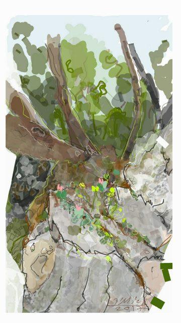 שורשים צומחים בסלע בעין אלון